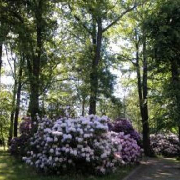 Stadtpark ©www.limbach-oberfrohna.de